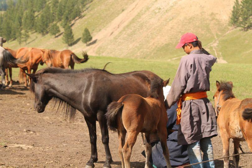 cheval et nomad mongole