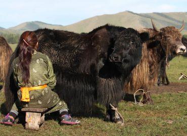 famille nomade mongolie