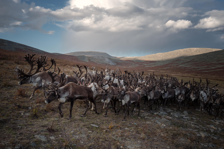 voyage photo en mongolie