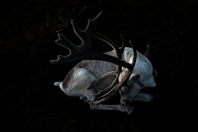 peuple de rennes
